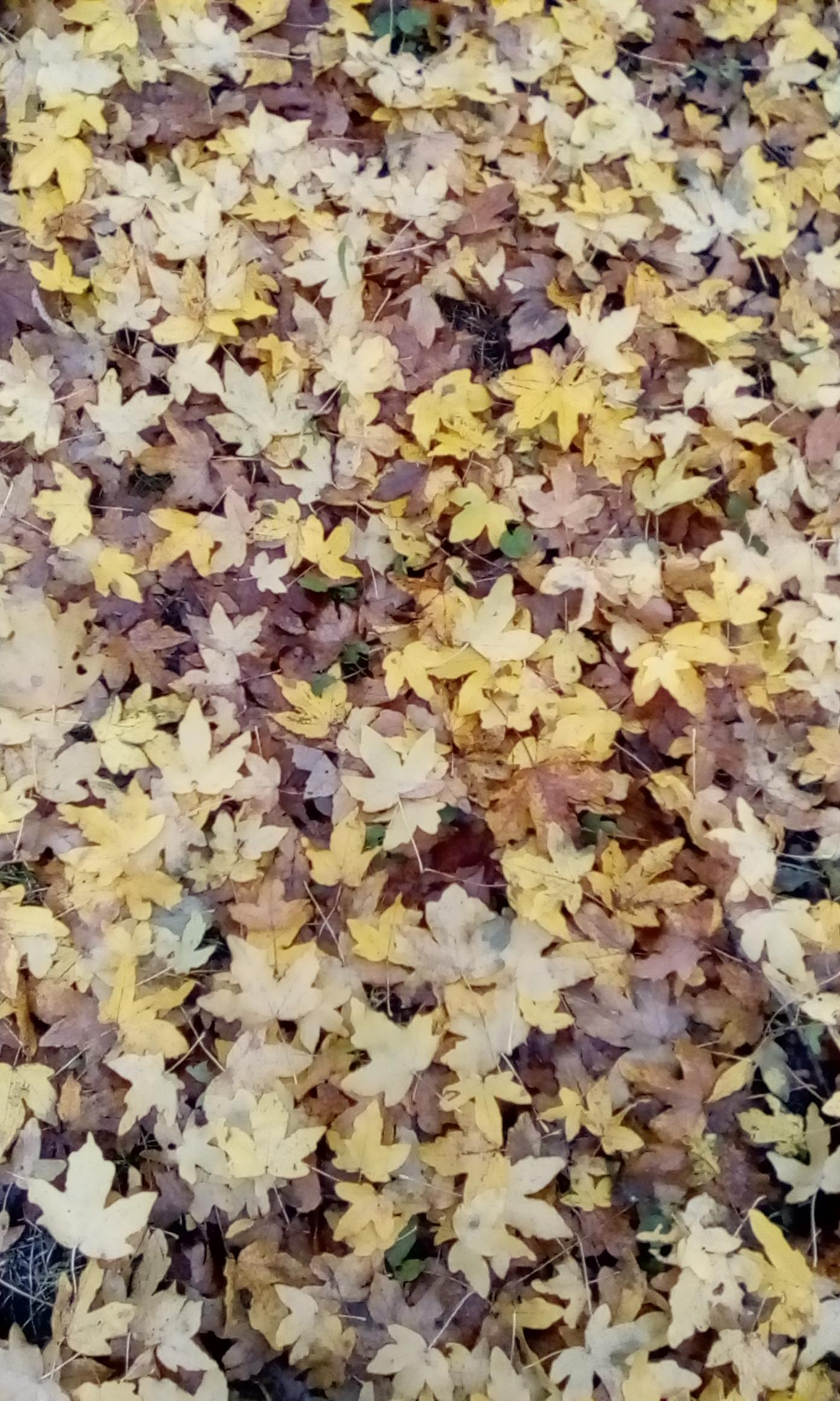 Liście jesień tapeta
